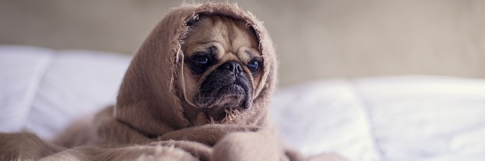 Hunderfutter für sensible Hunde